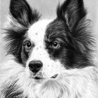 Art Drawing - Dog Portrait 02 - Animal - Border Collie