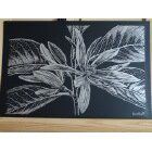 Art Drawing - Silver Magnolia - Flower - Nature